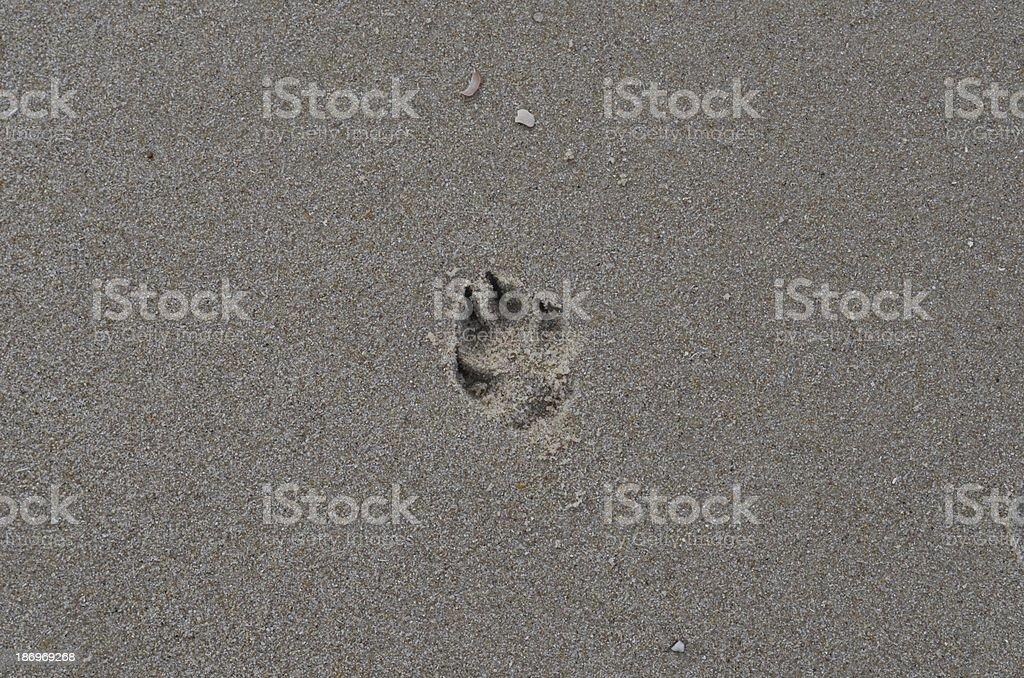 single paw print royalty-free stock photo