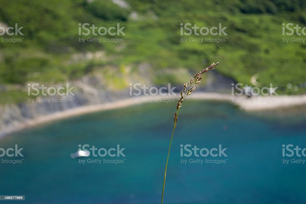 Single piece of grass overlooking sea royalty-free stock photo