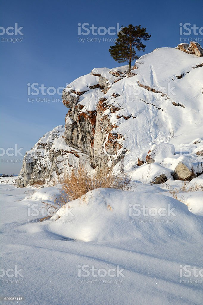 Single pine on snow-covered rock. stock photo