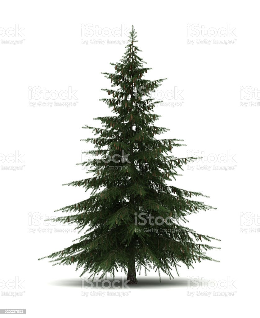 Single Pine Tree stock photo