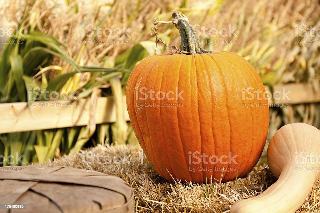 Single Pumpkin and a squash stock photo
