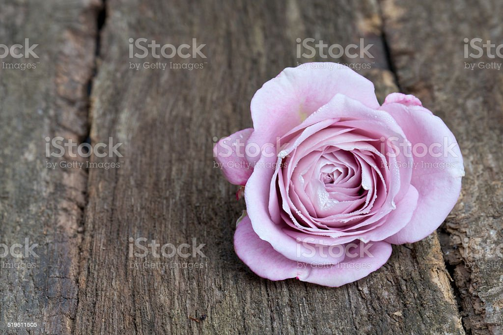 single purple rose on wooden surface stock photo