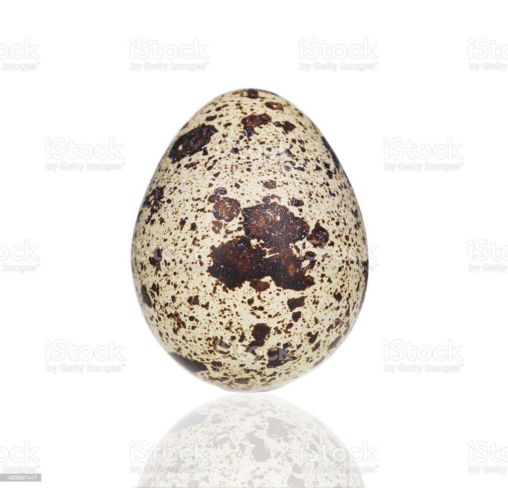 Single quail egg. stock photo