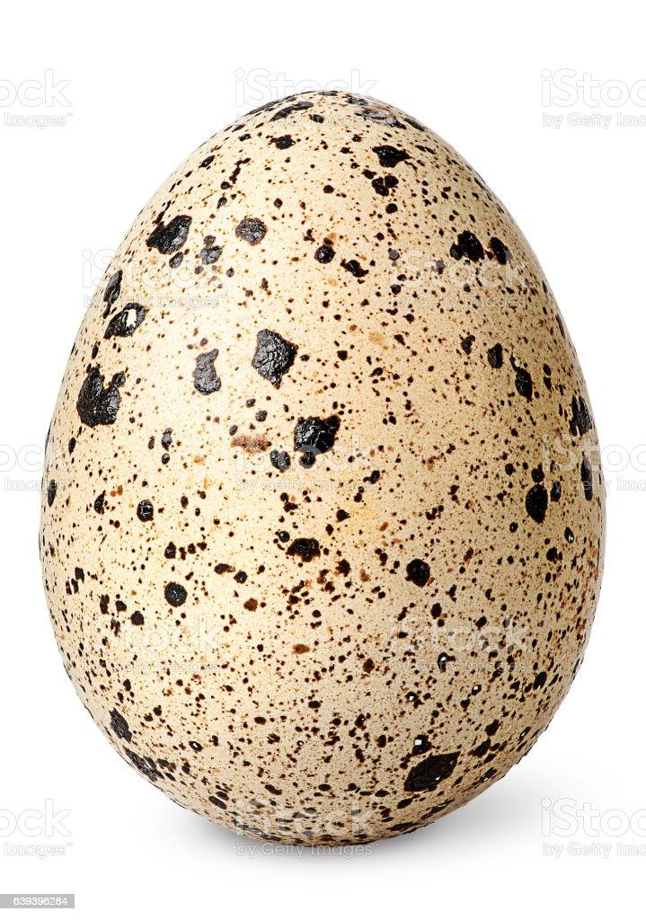 Single quail egg vertical stock photo