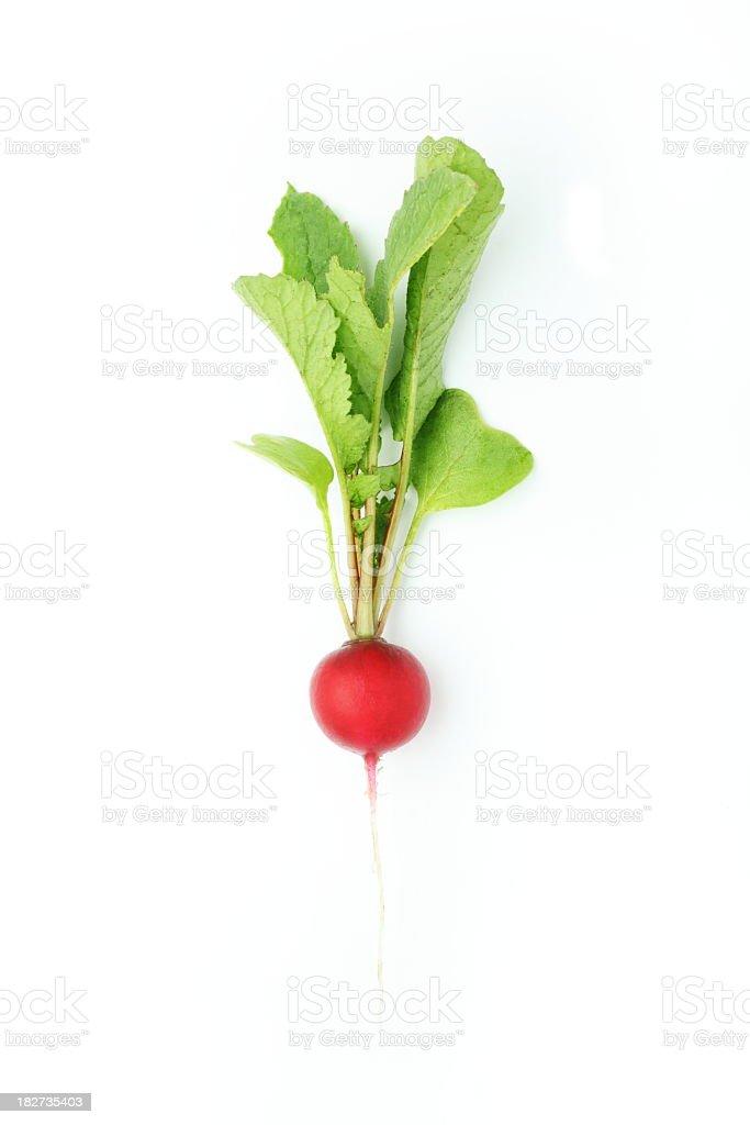 A single radish on a white background stock photo