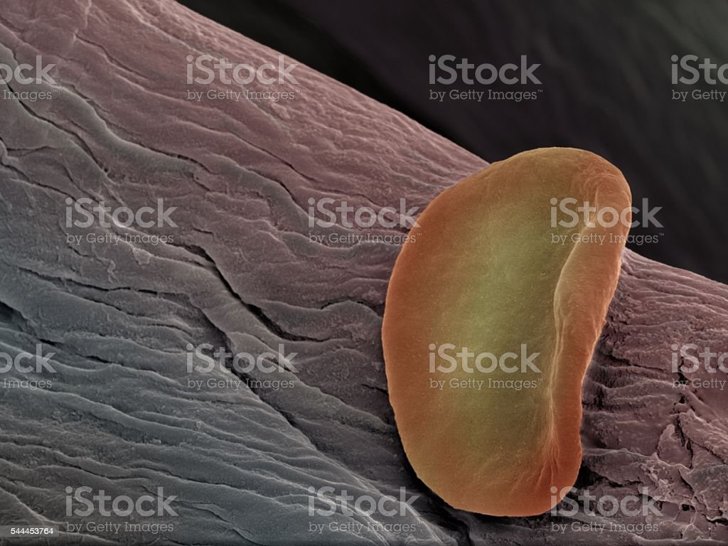 Single red blood cell stock photo