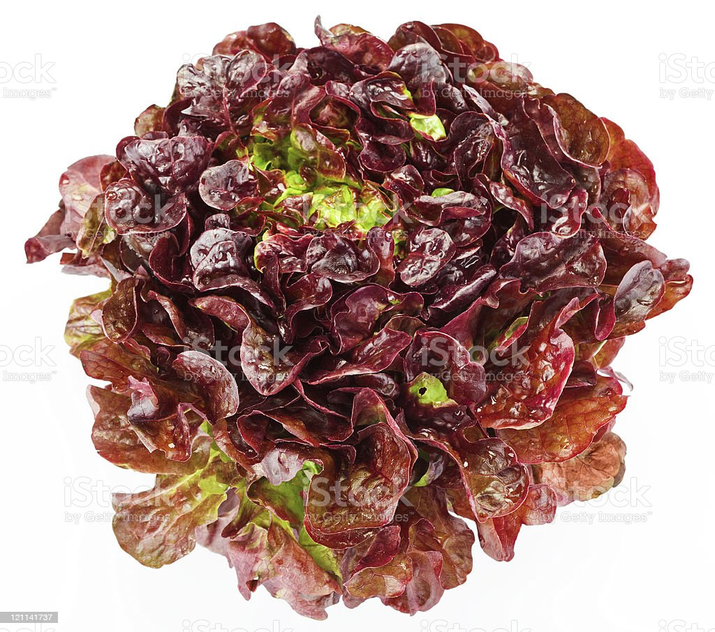 Single red cabbage lettuce head with a white background  stock photo