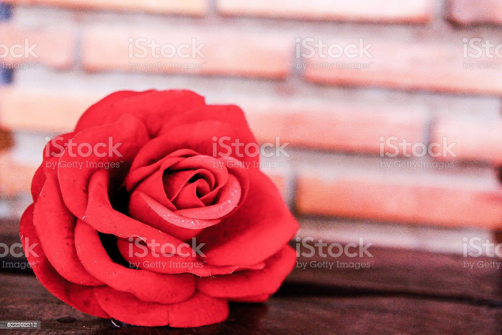 Single red rose with brick wall stock photo