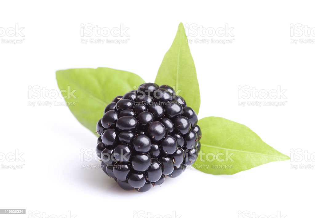 A single ripe blackberry with leaves stock photo