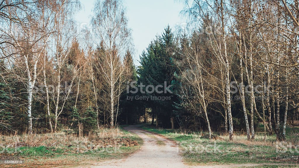 Single road leading into forest stock photo