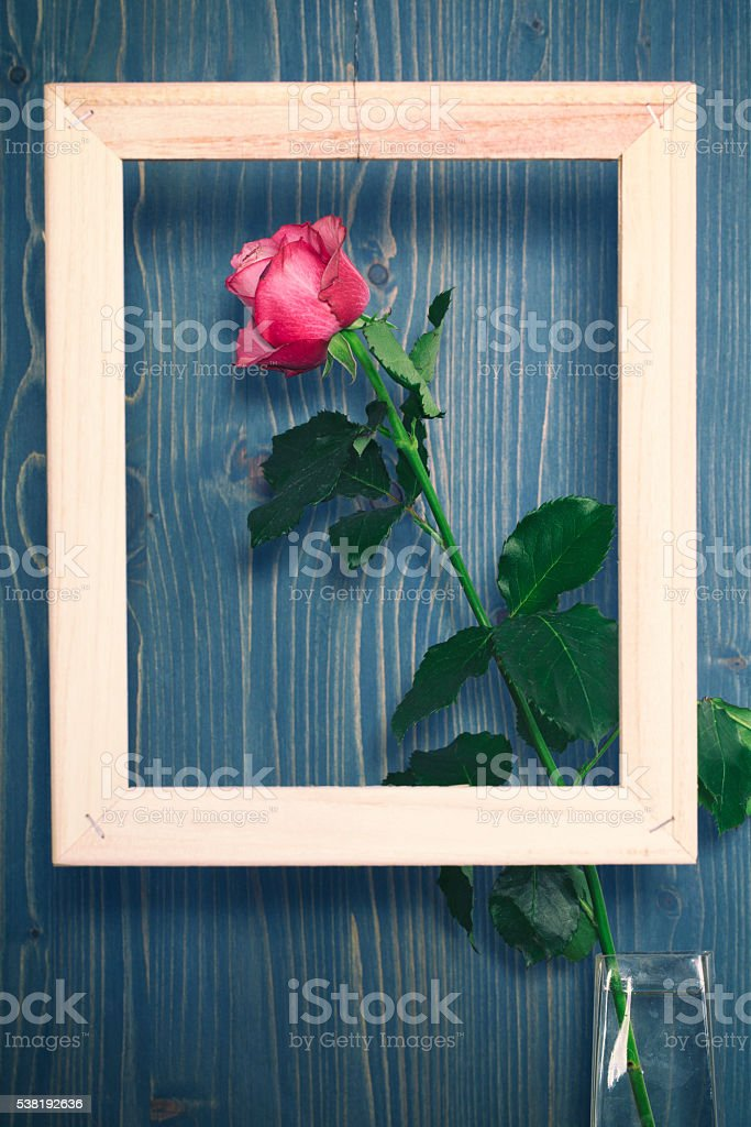 Single Rose in a Wood Frame stock photo
