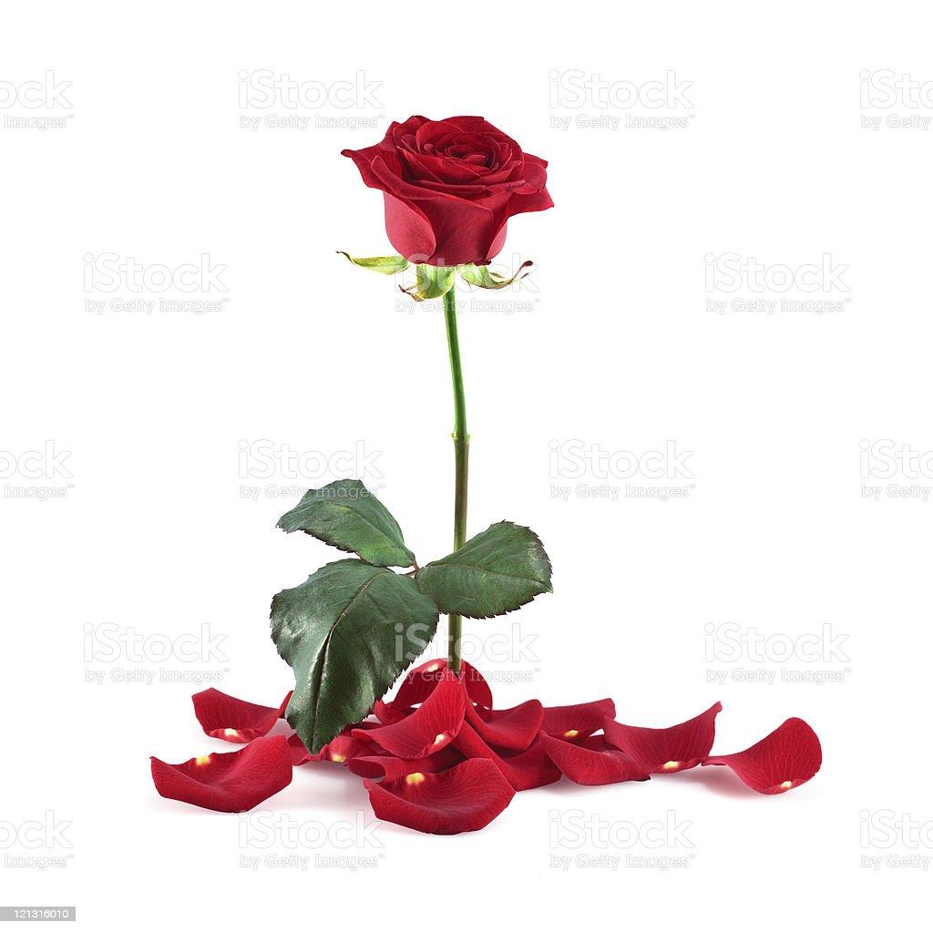 121316010 istock for Individual rose petals