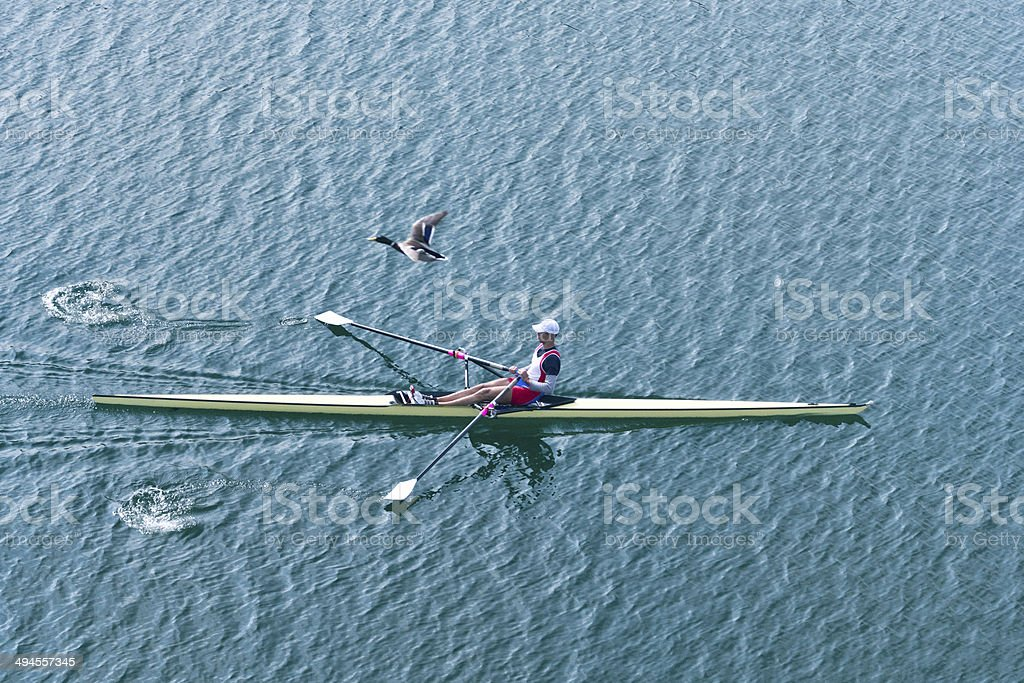 Single scull rowboat with mallard duck above stock photo