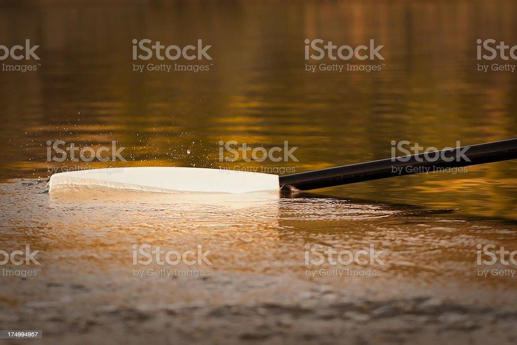 Single Scull's oar blade on water royalty-free stock photo