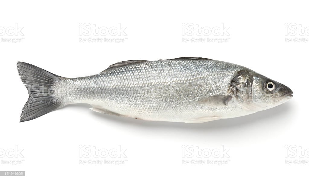 A single sea bass on a white background stock photo