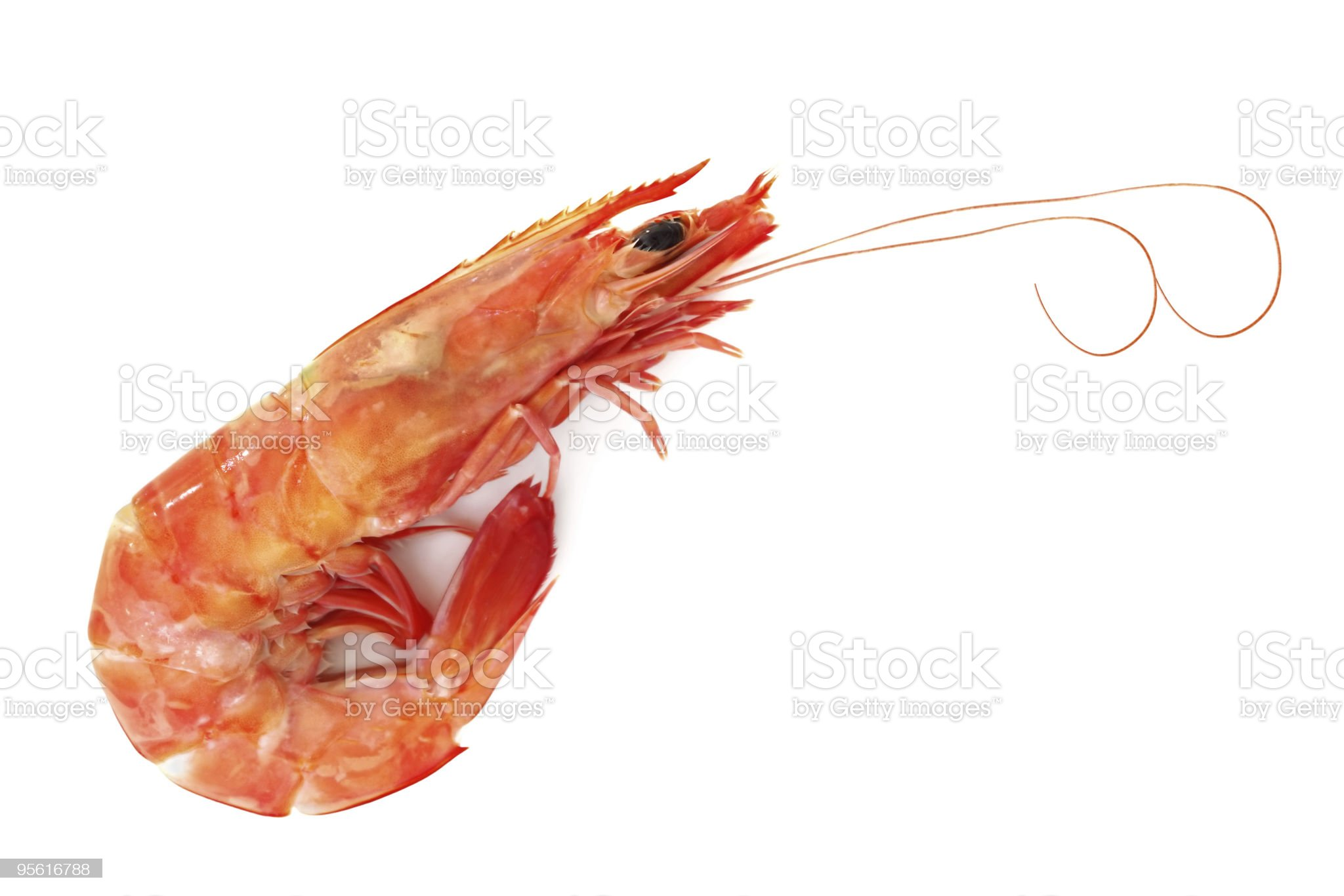 Single Shrimp royalty-free stock photo
