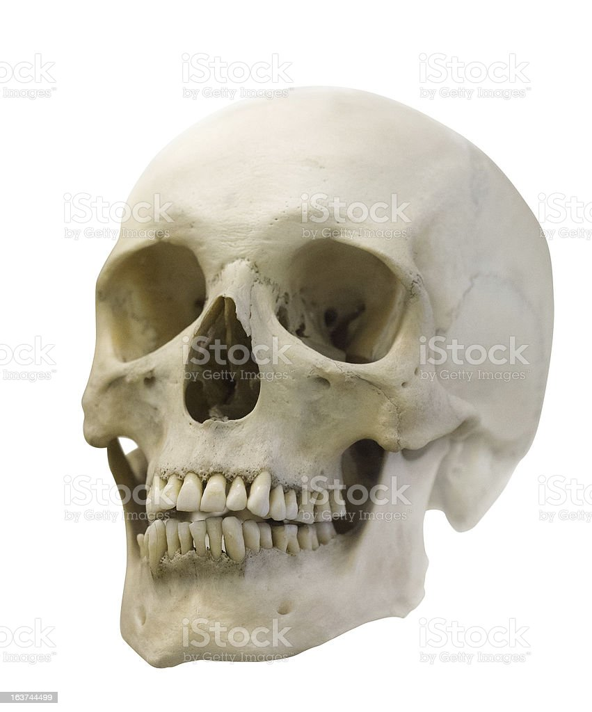 single skull isolated on white royalty-free stock photo
