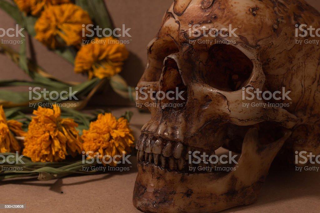 single skull with dry flower still-life stock photo