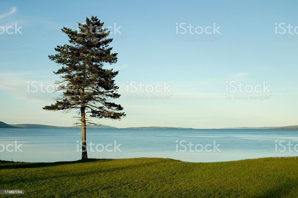 Single solitary tree on the grass by water royalty-free stock photo