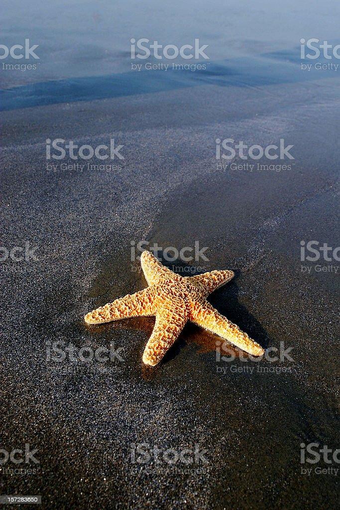 Single star. royalty-free stock photo