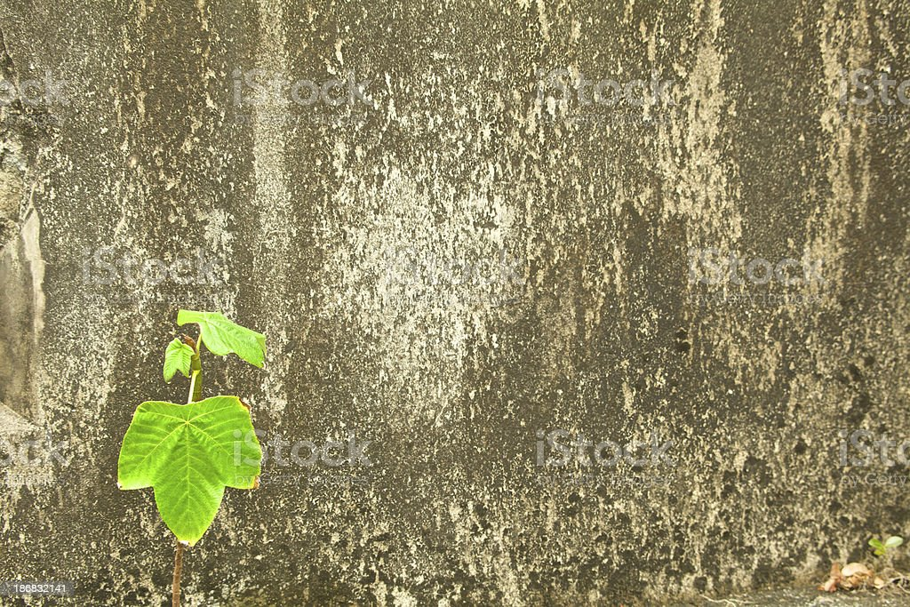 Single Stem With Leaves Grows Out of Concrete, Grunge stock photo