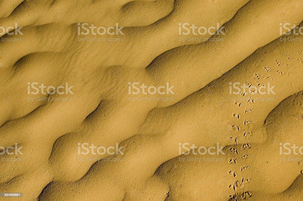 Single track on yellow sand dunes - Sahara desert royalty-free stock photo