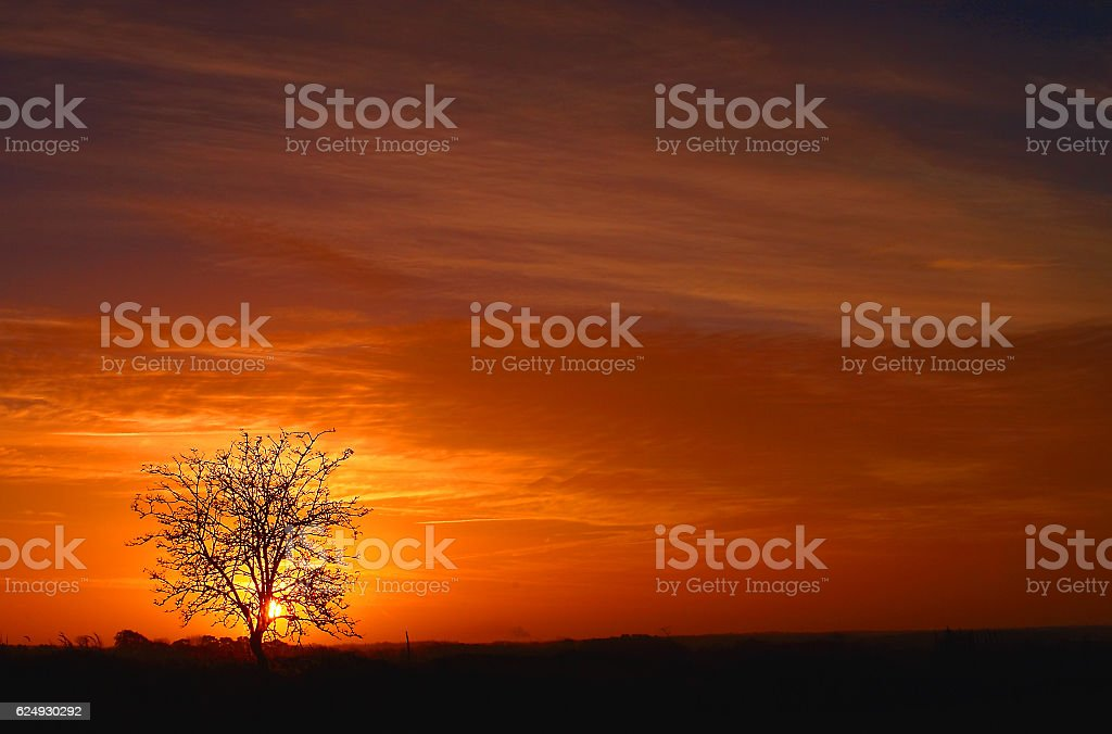 single tree against sunset stock photo