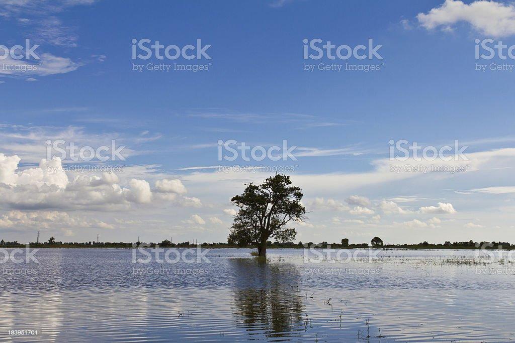 Single tree alone royalty-free stock photo