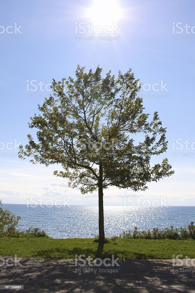Single tree and a sparkling blue lake stock photo