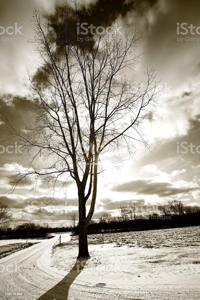 Single Tree And Drive Way royalty-free stock photo