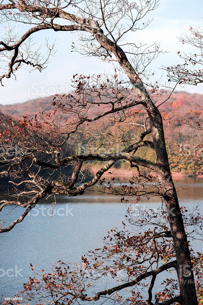 Single Tree and Lake in Autumn stock photo