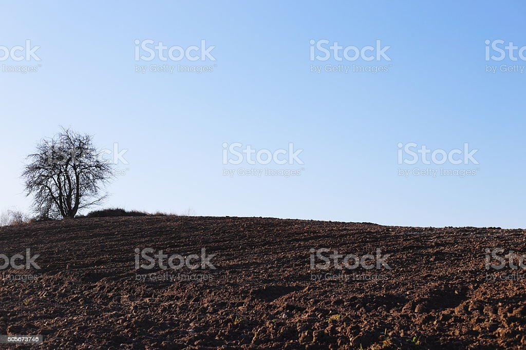 single tree and soil royalty-free stock photo