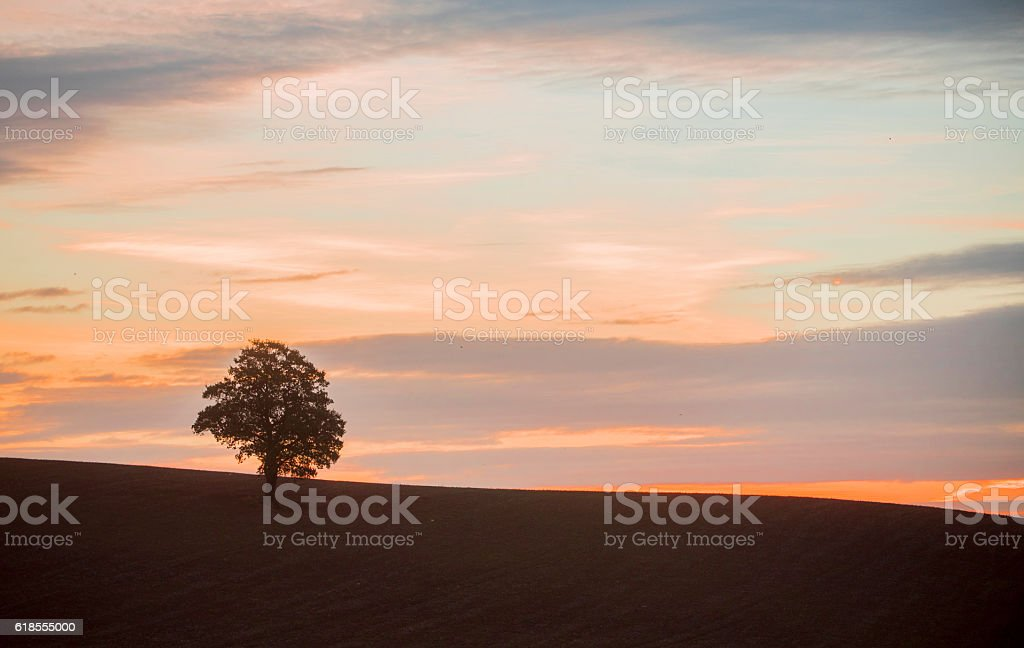 Single tree at sunrise royalty-free stock photo