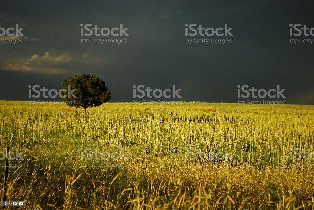 Single Tree Below the Storm stock photo