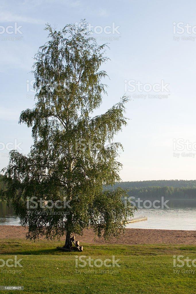 Single Tree by a Lake royalty-free stock photo