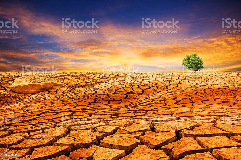 Single tree growing on cracked earth stock photo