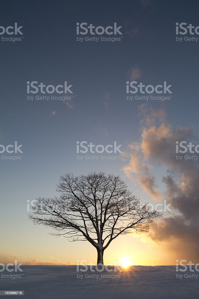 Single Tree in a field during winter at sunset royalty-free stock photo