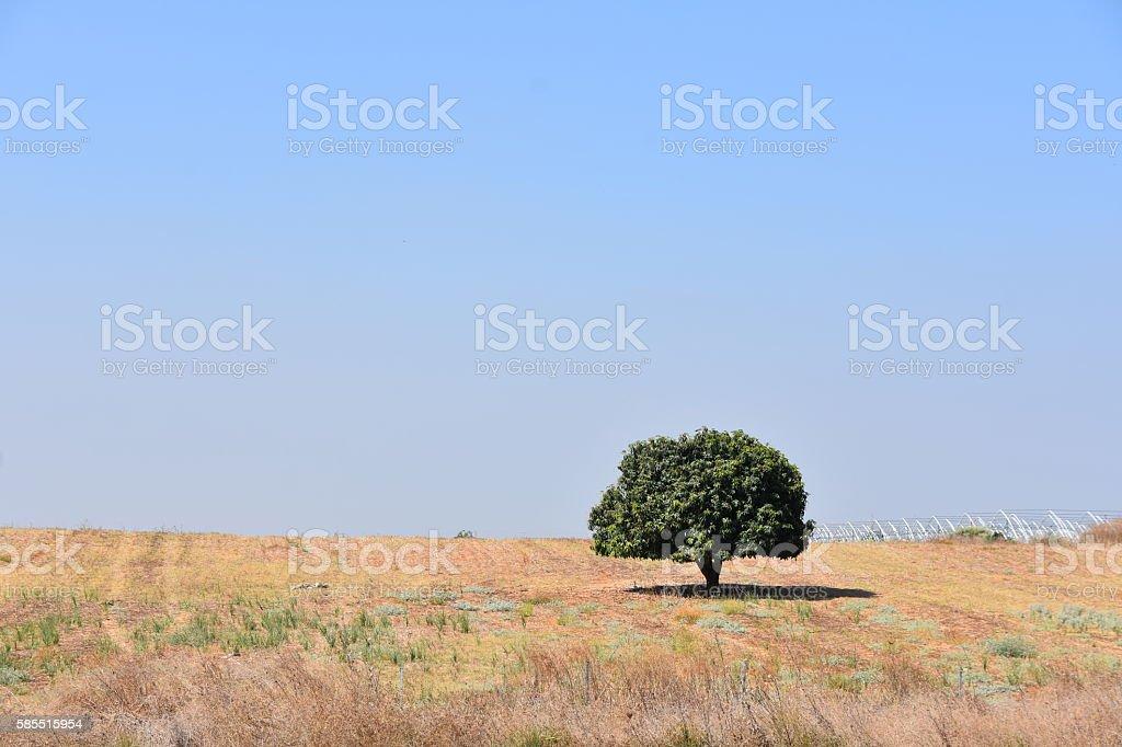 single tree in a field stock photo