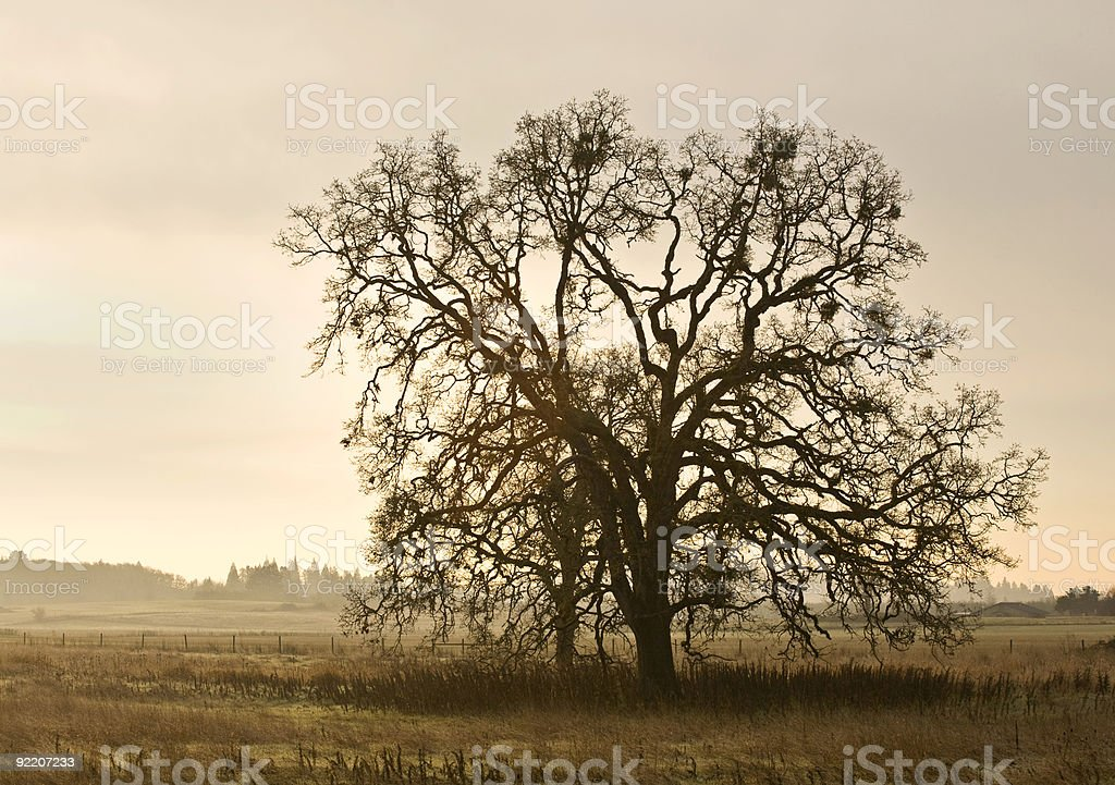 Single Tree in a Pasture royalty-free stock photo