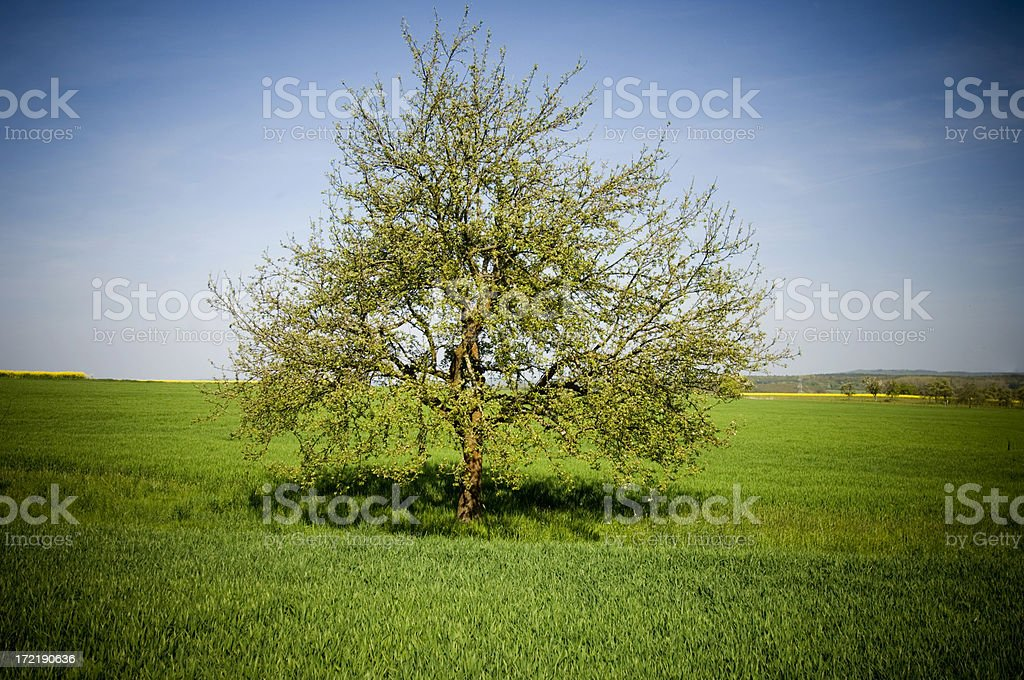 Single tree in grasslands royalty-free stock photo