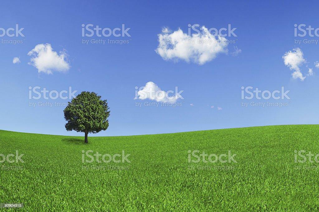 Single tree in green field under blue sky stock photo