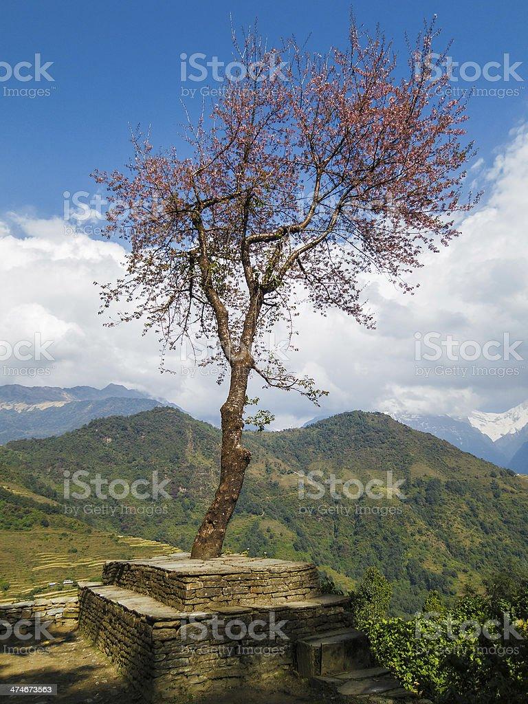 Single tree in Nepal stock photo