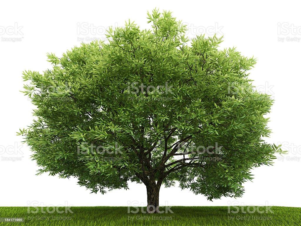Single tree in the field stock photo