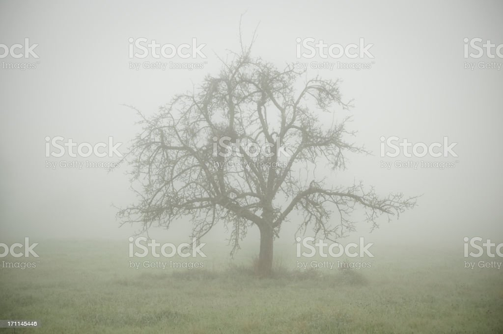 Single tree in the fog, gloomy and mysterious atmosphere stock photo