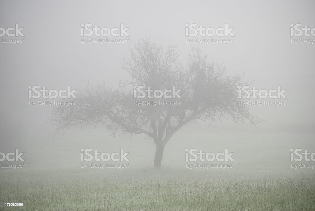 'Single tree in the fog, gloomy and mysterious atmosphere' stock photo