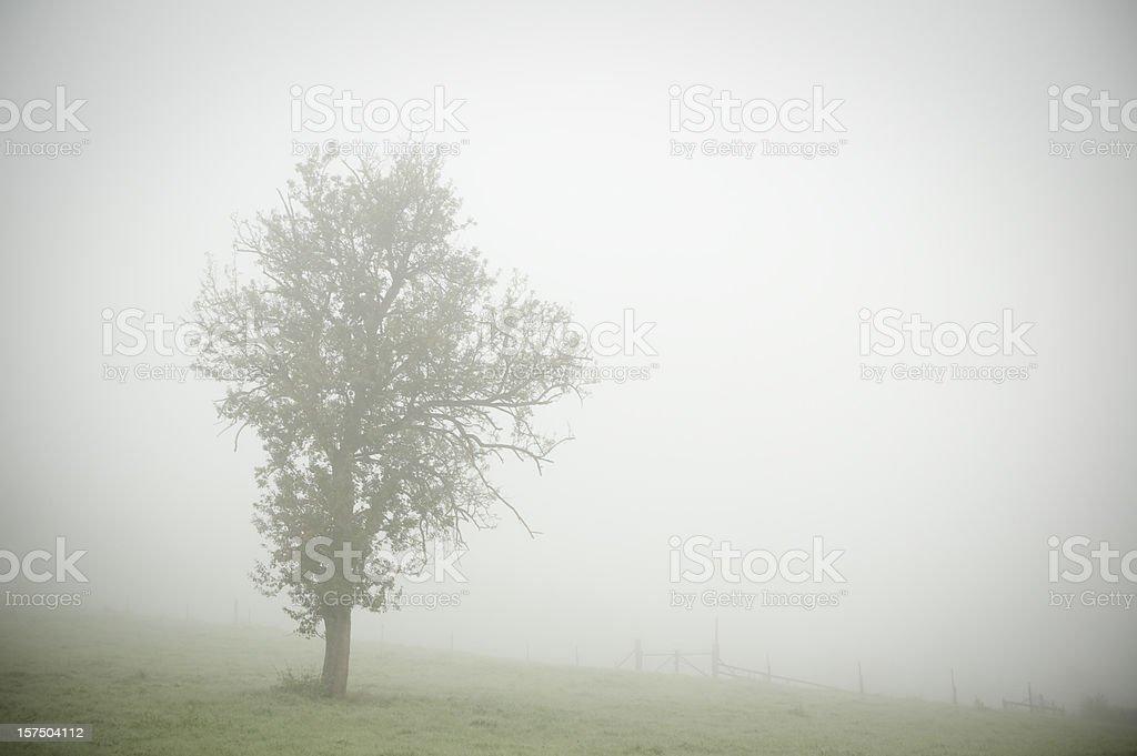 Single tree in the fog, gloomy atmosphere, copy space stock photo
