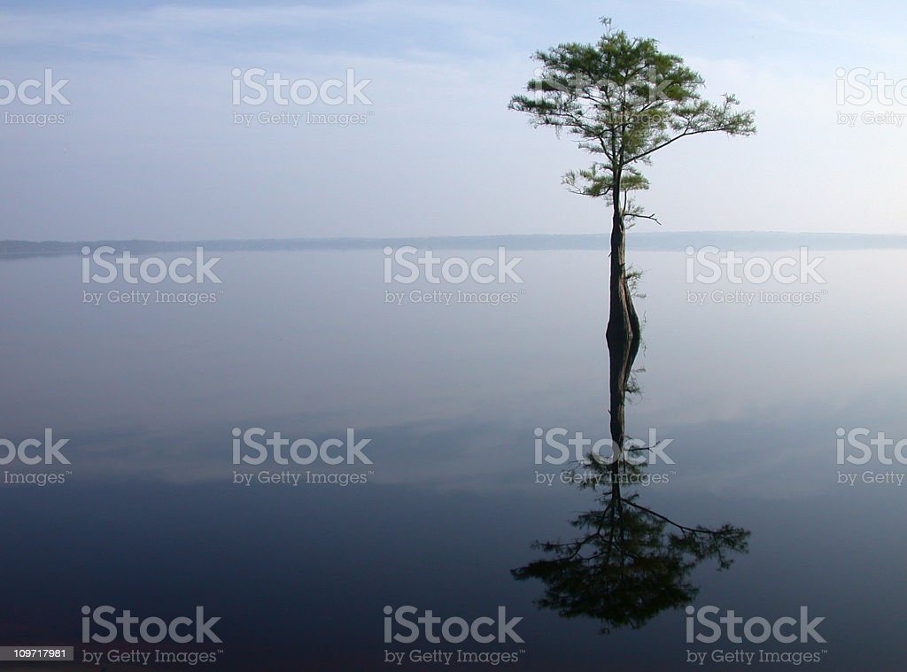 Single tree in the middle of a lake royalty-free stock photo