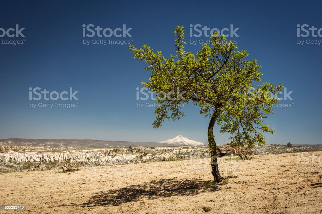 Single tree in the middle of day with Goreme City in background. Cappadocia, Turkey stock photo