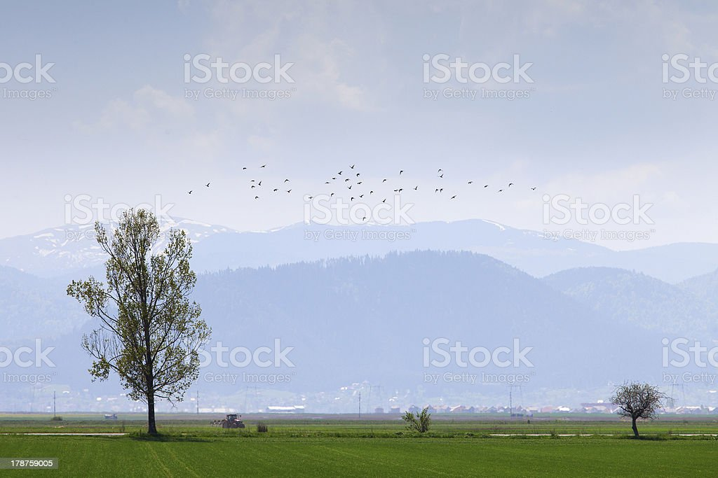 Single tree on a field with birds and mountains stock photo