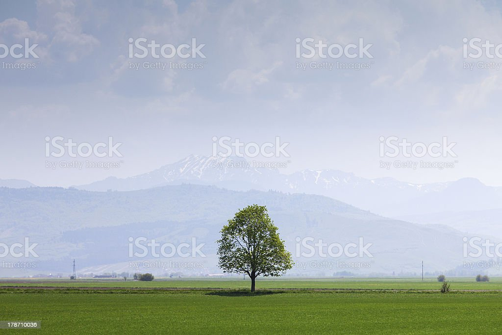 Single tree on a field with mountains stock photo